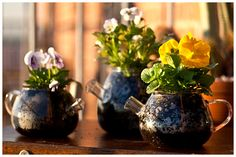 Teapot as planters! Look cute as with pansies!! xx