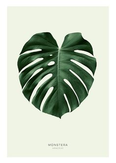 Poster with a green monstera leaf, a cleanly designed botanical print for both modern and classic interior design. We have many nice prints in our webshop and always good prices. Get inspired and order easily online! Poster Design, Print Poster, Collage Mural, Desenio Posters, Mode Poster, Impressions Botaniques, Minimalist Decor, Minimalist Bedroom, Minimalist Kitchen