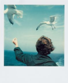 Seagulls and Boy