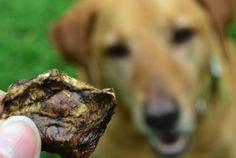 Read our expert tips and essential products for welcoming your new pet. #dogtreats #TuesdayMorning Beef lung treats $4.99 (compare at $10)