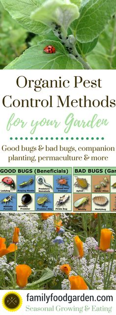 Organic Pest Control Methods - Family Food Garden: