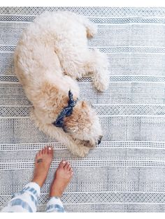 Bayside Stripe Rug, Blue - love this as a runner in the kitchen