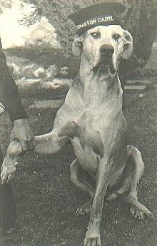 Just Nuisance was a Great Dane who lived on a British naval base in South Africa during World War II. The Royal Navy enlisted him to prevent him from being put down, and he was buried with military honors. Animal Heros, Loyal Dogs, War Dogs, Military Dogs, Interesting History, African History, Service Dogs, Working Dogs, Vida Guerra