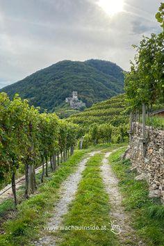 Tuscany, Vineyard, Wanderlust, Country Roads, Seen, Blog, Bucket, Puzzle, Travel