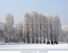 Park Winter Landscape Frozen White Fairy Stock Photo (Edit Now) 1582479928 Winter Landscape, Photo Editing, Royalty Free Stock Photos, Frozen, Fairy, Snow, Illustration, Photography, Outdoor