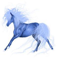 Riding Horse Icelandic Horse Dun