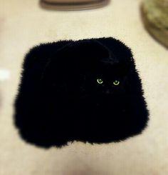 飼い主「ネコが座布団と一体化したで!」 何のことやらと思ったら、本当だった  –  grape [グレイプ]