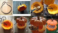 39 Best Pumpkin Bird Feeder Images
