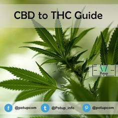 CBD to THC Guide from #PotUp