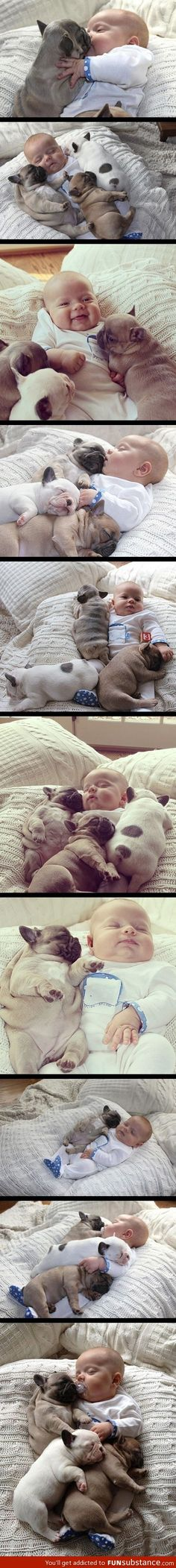 Cuteness overload! German bulldogs and a baby