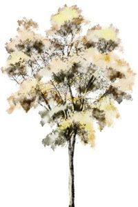 Architectural Renderings for Watercolor Trees