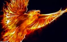 Google Image Result for http://images2.wikia.nocookie.net/__cb20120318012722/dragonvale/images/f/f6/Fractal_Phoenix_by_aceman67.jpg