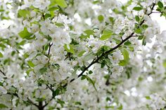 blow trumpet, for the world is white with may. – alfred, lord tennyson