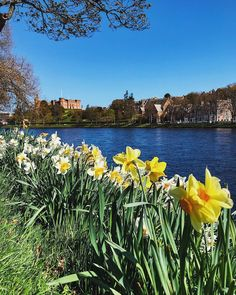 472 Likes, 13 Comments - David Powell Daffodils, Scotland, Have Fun, David, Friends, Water, How To Make, Travel, Life