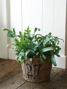 Rustic Rattan Planter Medium