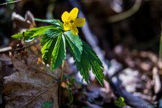 https://flic.kr/p/EZocgG | Tavasz...én így szeretlek! | Zemplén hegység kincsei...