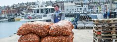 Whelks landed in Weymouth Harbour.  Picture by Lara Jane Thorpe Photography