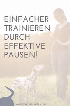 Dein Training wird erfolgreicher je besser du die Pausen einteilst! Achtest du schon auf Pausen?  Pause für den Hund || Übungen für den Hund || Hundetraining || Hundeschule || Gehirngerecht Lernen || So klappt deine Hundeerziehung