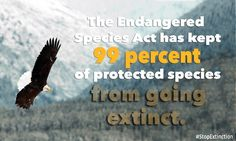 """The brought back the bald eagle and of other protected species. Please defend this vital law! Endangered Plants, Endangered Species, Protected Species, Rare Species, Stand Up For Yourself, Life Form, Wildlife Conservation, Bald Eagle, Pet Adoption"