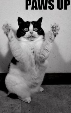 Paws up Kitty!