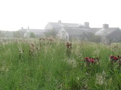 sublime planting - Oudolf.com - Piet Oudolf - Gardens - Private gardens - Nantucket Island - Nantucket Island 3