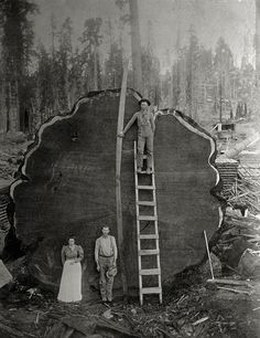 Loggers and the giant Mark Twain redwood, which was cut down in 1892 in California. - Photo: Beckwith, N.E./National Geographic - http://www.mnn.com/lifestyle/arts-culture/blogs/15-of-national-geographics-most-iconic-photographs