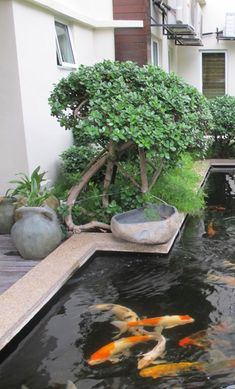 Garden Pond Design Ideas - Discover some of the awesome home garden ponds that make a calm retreat in our article this time. Small Garden Pond Design A small Small Japanese Garden Pond, Ponds For Small Gardens, Small Backyard Gardens, Small Ponds, Ponds Backyard, Garden Pond Design, Latest House Designs, Fountain Design, Waterfall Design