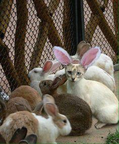 Procura-se coelhinhos pra trabalhar nessa páscoa...