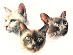 how to draw with colored pencils step by step - Google Search