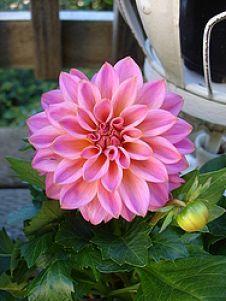 Gorgeous Flowers :: Alexandra Arena's clipboard on Hometalk :: Hometalk