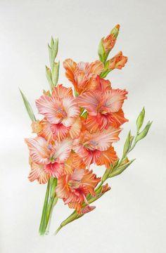 watercolor gladiolus tattoo에 대한 이미지 검색결과