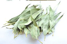 """""""Eucalyptus Tea"""" Eucalyptus does have incredible medicinal properties… it combats: snoring fevers infections colds sore throats weeping in the grocery aisles Healing Cold Sore, Natural Healing, Holistic Healing, Best Anti Aging, Anti Aging Cream, Eucalyptus Tea, How To Treat Eczema, Snoring Remedies, Face Oil"""
