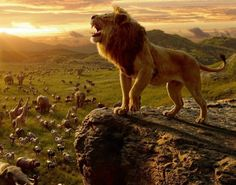 Just see the new lion king! What an amazing film, same but different! by Things Walt Disney Watch The Lion King, Lion King 2, Lion King Movie, Disney Lion King, Disney Pixar, Walt Disney, Disney Animation, Hd Movies, Movies Online