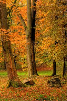 ~~THE MAGIC OF FALL ~ Kassel, Hesse, Germany by MERLIN08~~