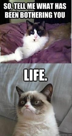 Quotes for Fun QUOTATION - Image : As the quote says - Description 30 Grumpy cat Funny Quotes cat memes Sharing is love, sharing is Cute Animal Memes, Funny Animal Quotes, Animal Jokes, Funny Animal Pictures, Cute Funny Animals, Cute Cats, Funny Quotes, Hilarious Pictures, Life Quotes