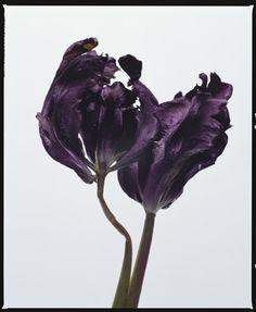 Dutch Photographer - Lidewij Edelkoort