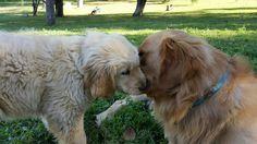 Kisses ❤🐶🐕🌼