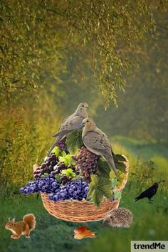 Birds+On+Grapes+(1) od Mirna M - trendme.net