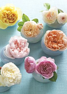 English/garden rose You can't beat David Austin English roses for sheer romance and beauty. They are so pretty in floral bouquets ! Colorful Roses, Simple Flowers, My Flower, Beautiful Flowers, Pastel Roses, Pretty Roses, Flower Bomb, Fresh Flowers, Beautiful Things
