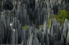 The colossal 'Grand Tsingy' landscape in western Madagascar is the world's largest stone forest, where high spiked towers of eroded limestone tower over the greenery.