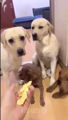Cute Baby Dogs, Cute Funny Dogs, Cute Dogs And Puppies, Cute Funny Animals, Funny Babies, Funny Cats, Doggies, Funny Animal Jokes, Funny Dog Memes