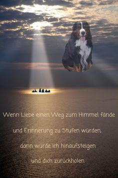 Die 29 Besten Bilder Zu Murphy Berner Bar Sennenhund