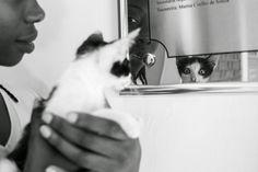 uma foto de animal de rua por semana por dez anos | César Brasil Fotógrafo Protetor - fotógrafo de pets | gato, gatinho, vira-lata, callejero, cat, street cat, blanco y negro, black and white, preto e branco