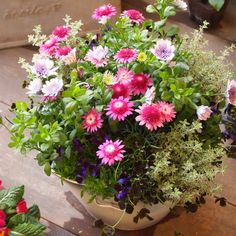 sola og planta ハーブとお花のお庭日記の画像