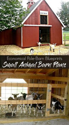 This plan set includes pole-barn building blueprints for three small barns that have been used to shelter lamas, alpaca Small Barn Plans, Small Barns, Farm Plans, Pole Barn Plans, Goat Barn, Farm Barn, Farm Shed, Pole Barn Construction, Construction Business