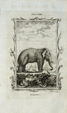 1781 Antique Buffon copper engraving of an ELEPHANT. 231 years old rare print.. $29.00, via Etsy.