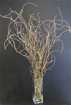 CNatural curly willow branches, 3 to 4 ft in length. Curly willow ships fresh, subject to stock on hand.