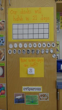 Keeping track of chick hatching  (originally from: http://littlemissglamourgoestokindergarten.blogspot.com/search/label/chicks)