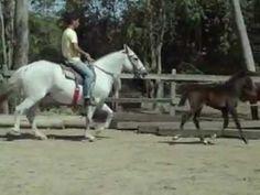 haras paraíso do cavalo - Odalisca Bela Cruz-21 7832-8374