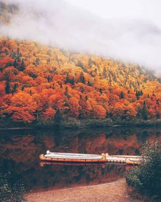 Quebec's Parc National de la Jacques-Cartier absolutely taken over by peak fall foliage. 🍁 Picture by Montreal Quebec, Quebec City, Cheap Airlines, Parc National, Airline Tickets, In This World, Travel Destinations, How To Memorize Things, Quebec